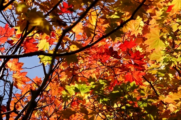 姥湯温泉の紅葉 1.jpg