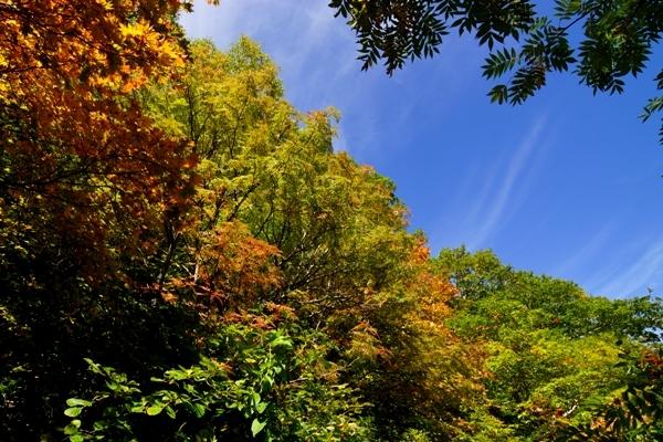姥湯温泉の紅葉 2.jpg