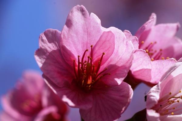 桜マクロ2.JPG