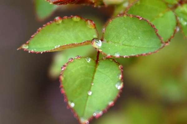 葉と水玉.JPG