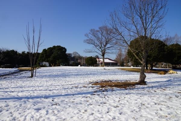 雪の大崎公園.JPG