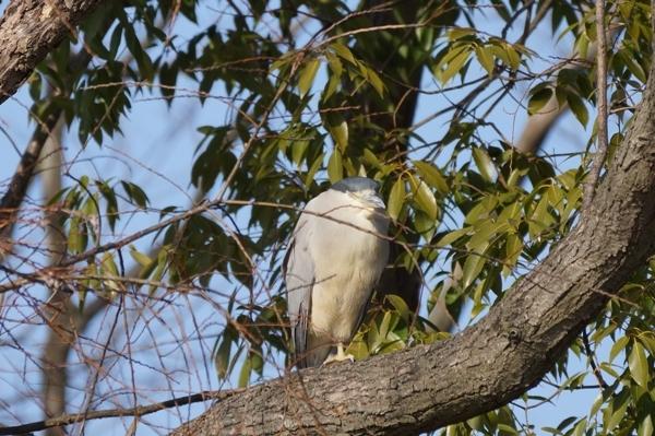 鳥4.JPG