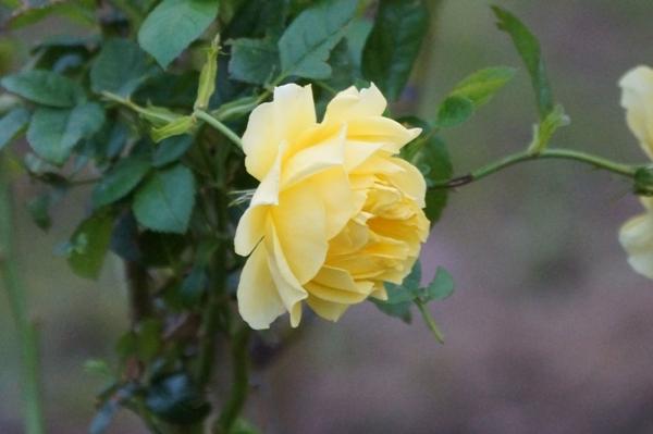 千葉ポートパークの花1.JPG