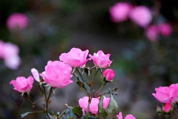 千葉ポートパークの花2.JPG