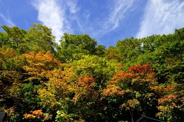 姥湯温泉の紅葉 3.jpg