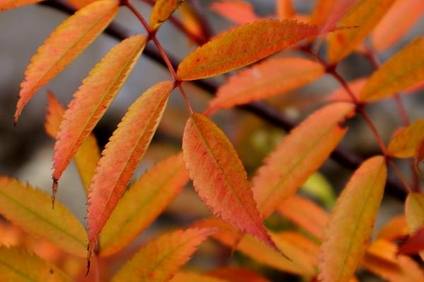 姥湯温泉の紅葉 4.jpg