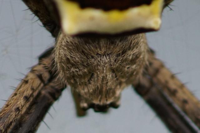 蜘蛛の顔.jpg