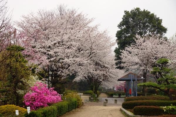赤山城跡公園.JPG