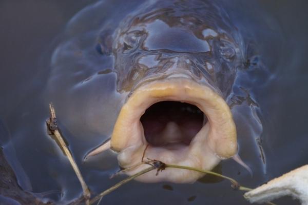 鯉の口.JPG